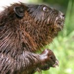 Rodent Control Service and Rodent Removal Atlanta